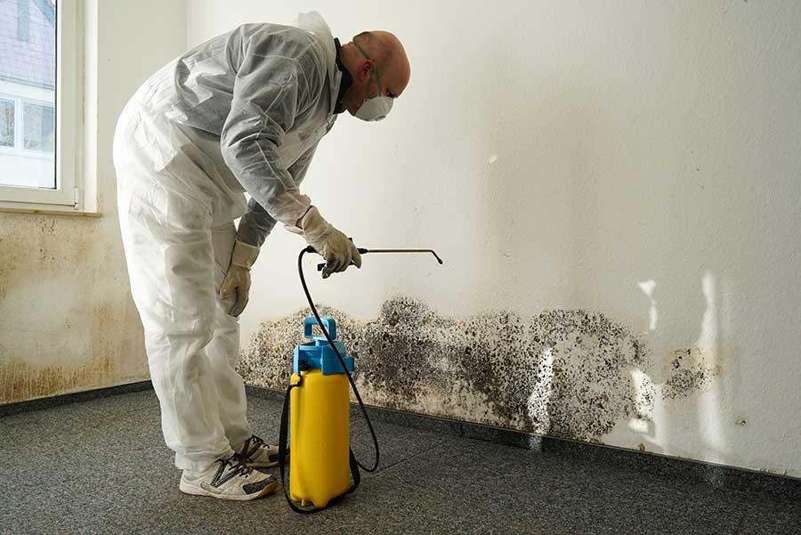 Professional Spraying Mold - UK Property Cash Buyers