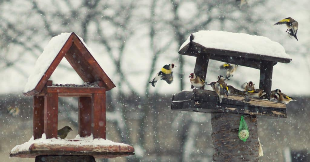 bird table in winter - UK Property Cash Buyers